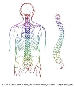spine-257870_1280