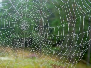 spider-web-1003537_1280